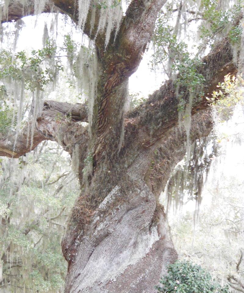 Southern Oak.web.Alex DiFrancesco