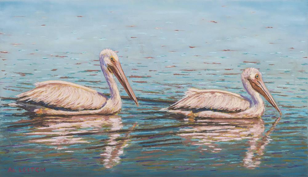 """""""Cruising Pelicans"""""""