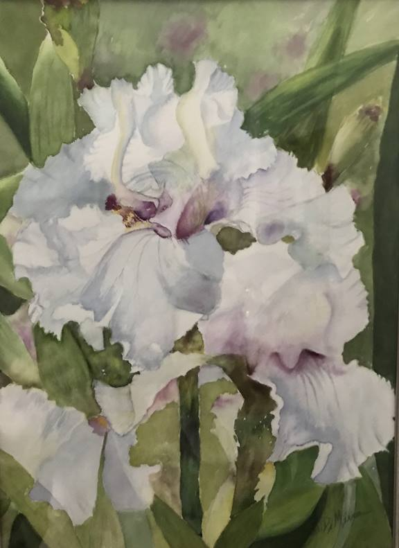 English Irises.Ruth DiMirra
