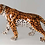 "Thumbnail: ""Faience"" Ceramic prowling leopard, hand-decorated"