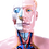 Thumbnail: Anatomical Male Torso (Life Size)
