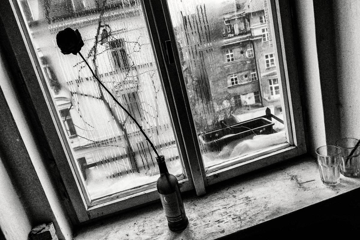 patek_z_okna
