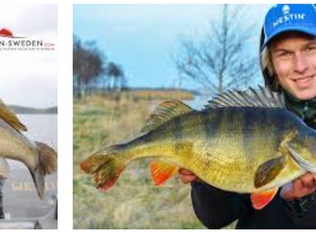 Pescuitul în Suedia, țara recordurilor la pescuitul de răpitori