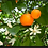 Thumbnail: Neroli, Petitgrain (Organic)