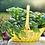 Thumbnail: Basil, Sweet (Organic)