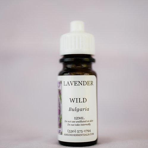 Lavender (Wild)