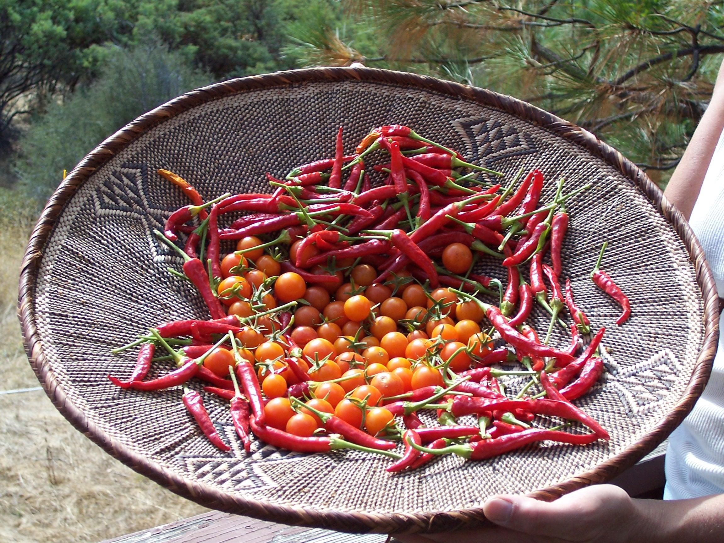 Chilis_Tomatoes