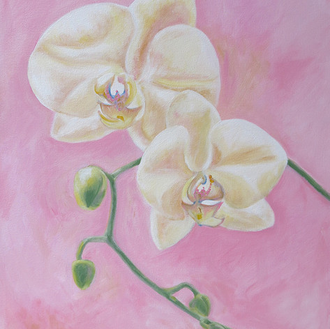 Orchids Pink