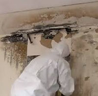 mold cleaning.jpg