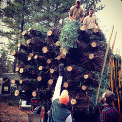 over 600 trees from smokey holler