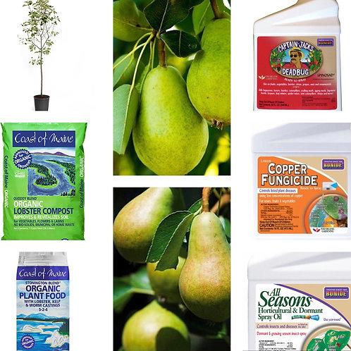 Anjou & Bartlett pear tree bundle