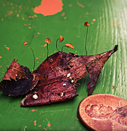 tiny ecosystem on a leaf