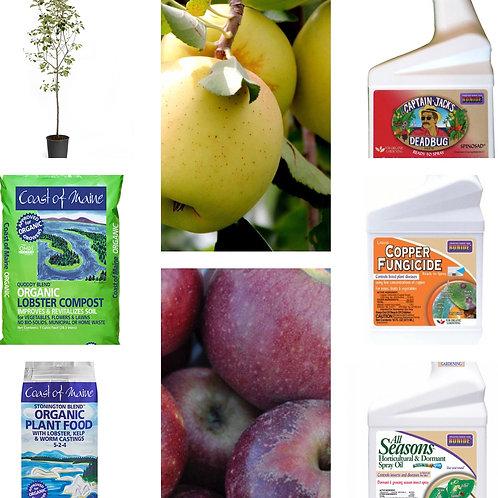Golden Delicious & Braeburn apple tree bundle