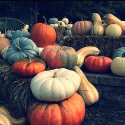 artfully displayed gourds & pumpkins