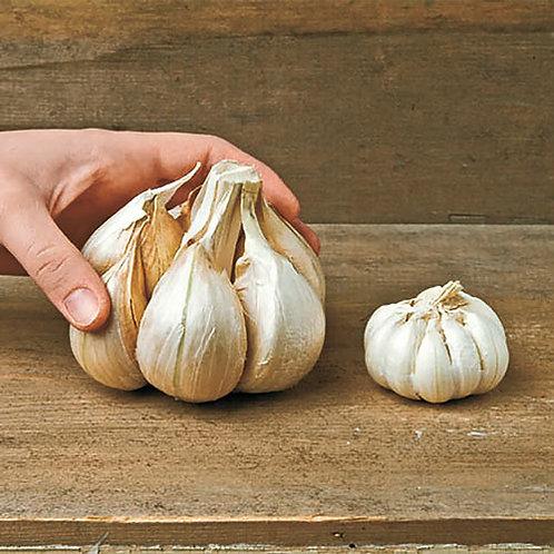 Elephant Seed Garlic