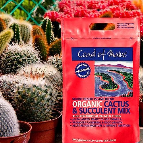 Mount Desert Island...Cactus & Succulent Mix