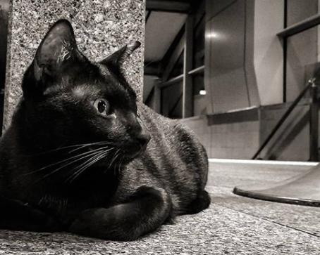 Despedida de un amigo felino