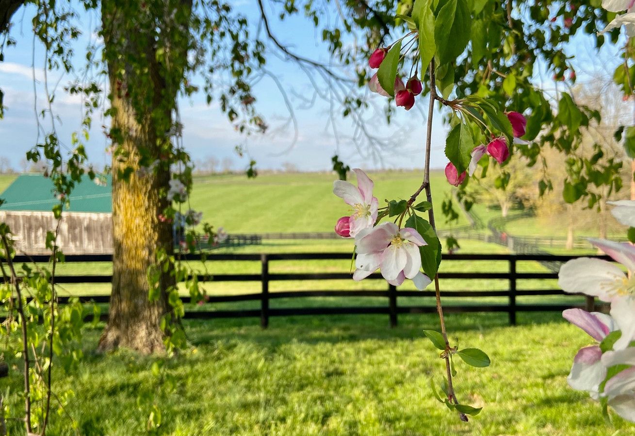 Springtime at Cherry Knoll Farm