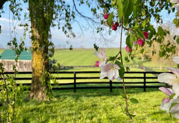 Springtime at Cherry Knoll Farm