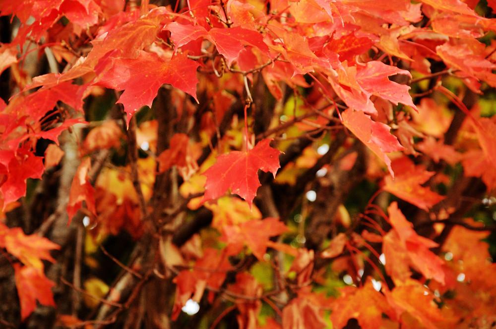 Maple leaf bouquet