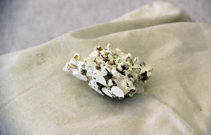 piecemeal barnacle