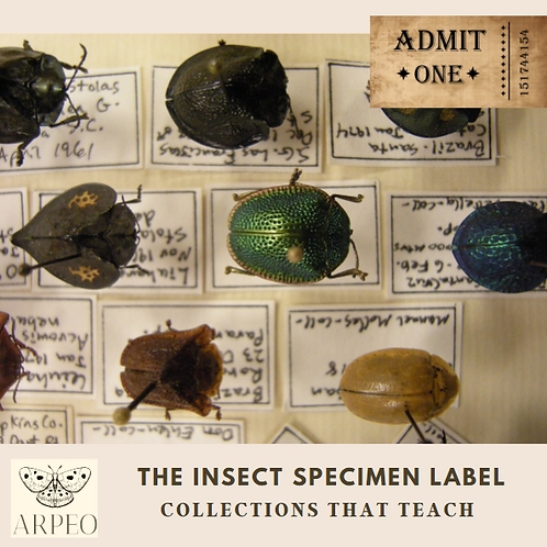 Collections that Teach: The Insect Specimen Label