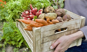 Crate%252520of%252520Vegetables_edited_e