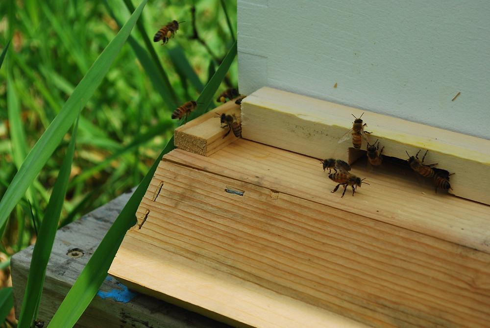 Hive at 2 weeks