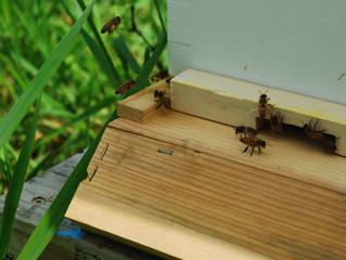 Virginia's NewBee Blog: Ants?!