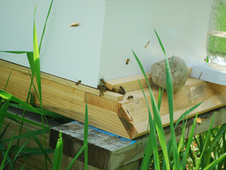 Virginia's NewBee Blog: Hive Inspection!
