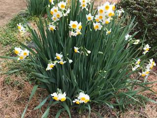 春の訪れ。。。