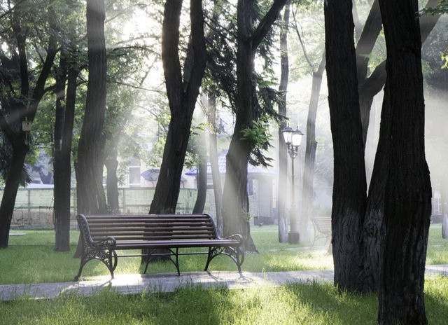 sunlight on park bench
