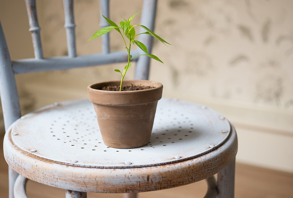 chair with a growing plant
