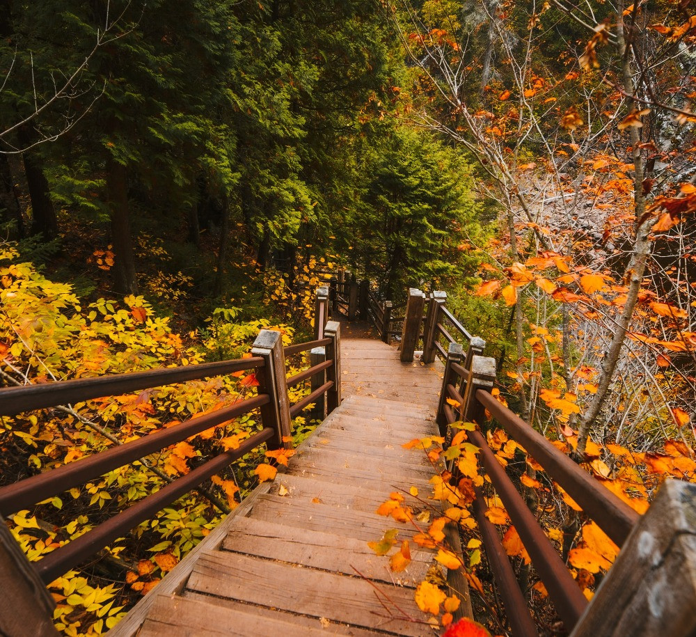 stairs down a colorful hill