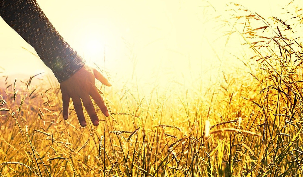 Hand in grass field