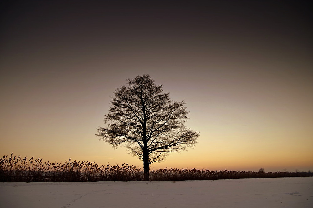 tree silhouetted against the sky at dawn