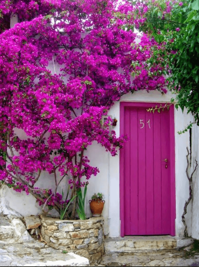 choosing front door colors