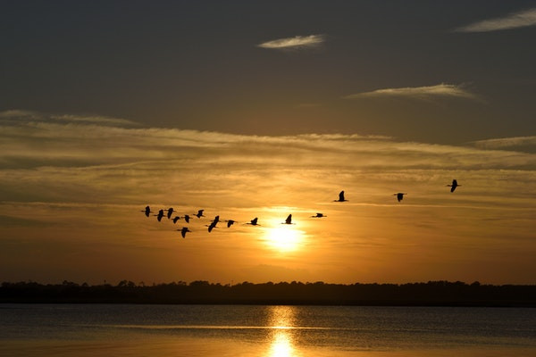 Birds flying in front of setting sun