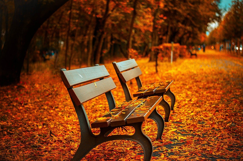 park benches in fall