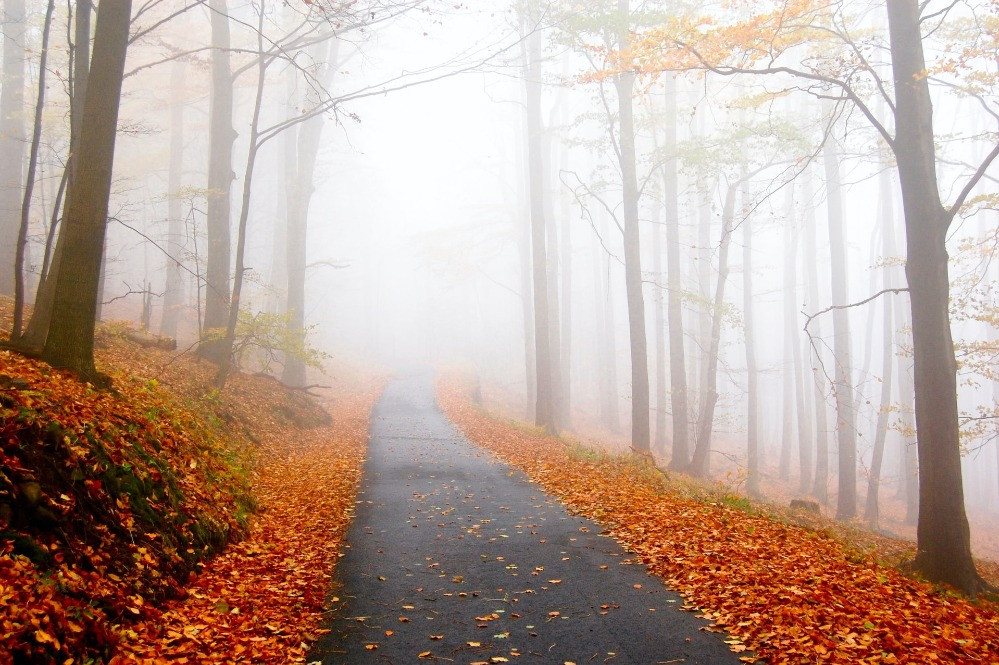 a road into the mist