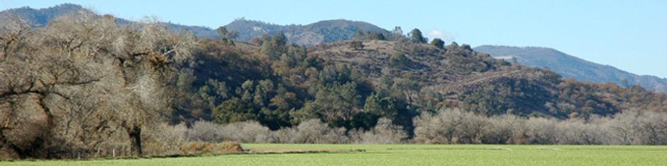 Oak hill.jpg