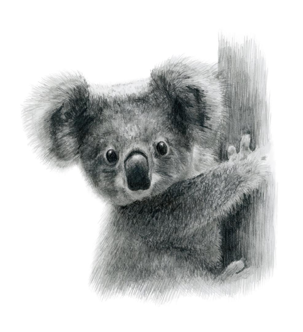 Koalajoey.jpg