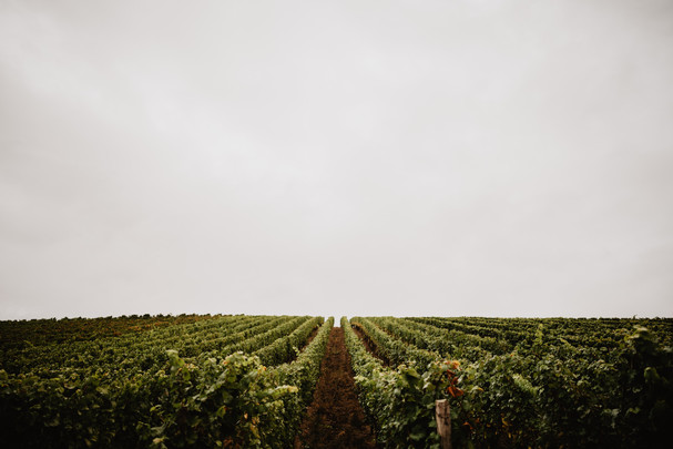 ROVA FineArt business photography-wein v
