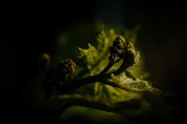 ROVA FineArt Photography-Weingut Reporta