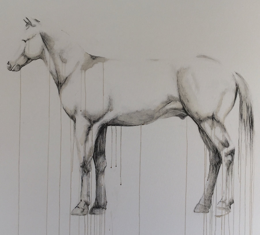 "Untitled (A Horse with No Name)  48"" x 60"" Charcoal & Coffee on Canvas"
