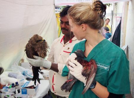 Do birds need pain relief?