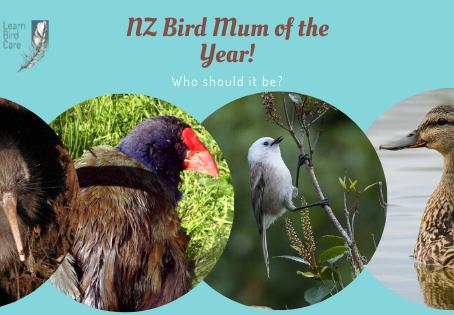 """Which NZ Bird gets """"Mum of the Year""""?"""