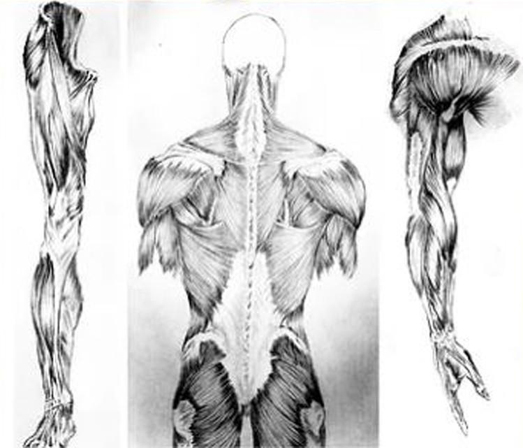 darci_campioti_anatomia_para_quadrinhos_