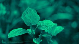 Plante Zoom (4)F.jpg