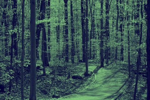 Parc-Nature du Bois-De-Liesse 29F.jpg